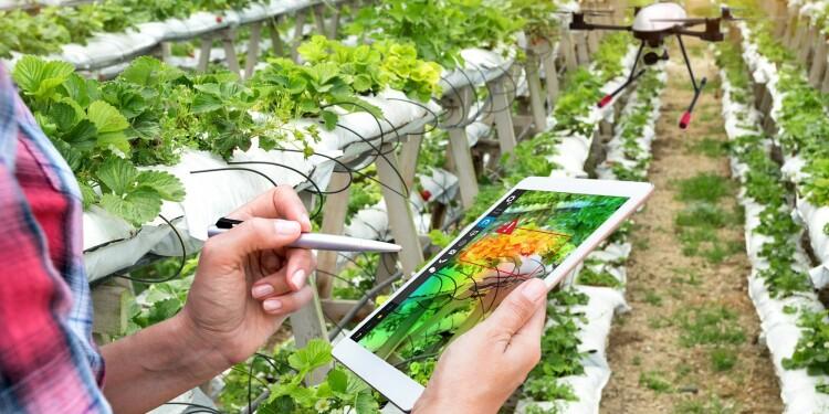 Innovación (14) Dron agricultor con tablet